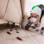 Pest control Melbourne expert working in the flat