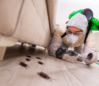 Why You Should Have Regular Checks From Pest Control In Melbourne